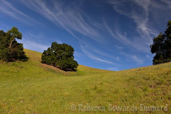 Harvey Bear Ranch Wildflower Hike (03.28.2015)