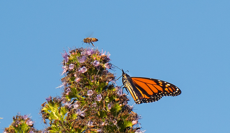 Butterfly and Bee.jpg