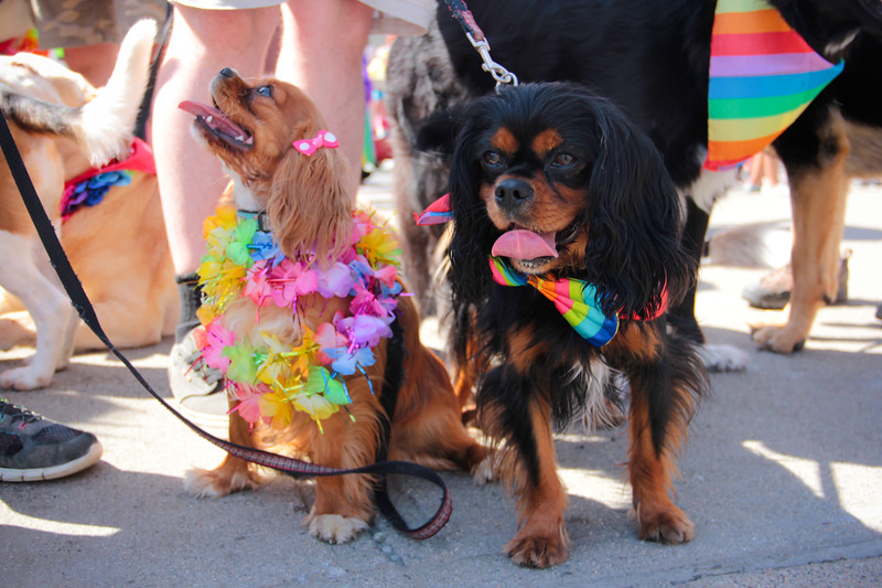 pride2016IMG_7450.jpg