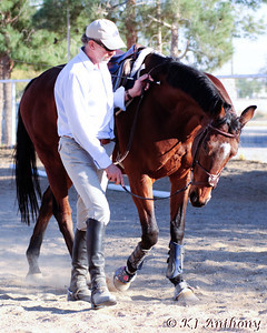 Will Faerber Classical Dressage Clinic November 2009
