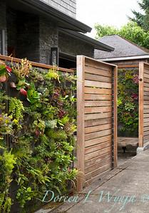 Living Wall - Leslie Campbell - landscape designer - Portland