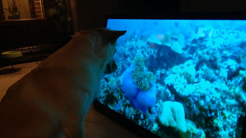 Fox and DogTV 3