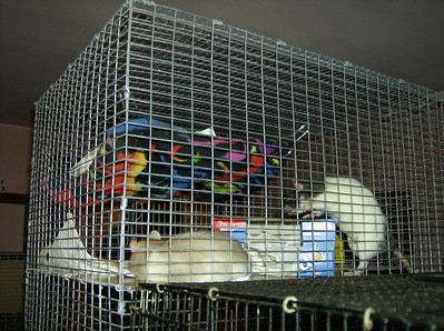 Assorted Rat Cages