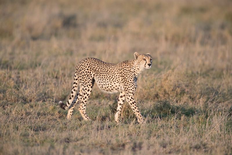Africa - 101616 - 5906.jpg