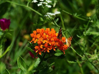 Butterflies on Orange