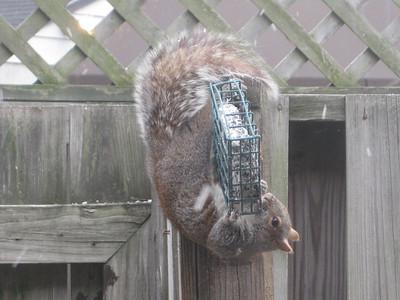 Squirrel 20120304