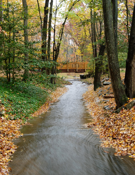 Stream through Hickory Cluster in the fall