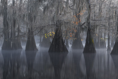 NEW RELEASE! - Remnants of Autumn on the Bayou