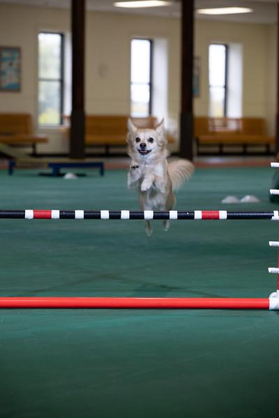 SPCA_Agility-9.jpg