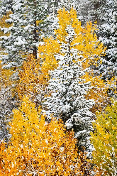Eastern Sierras, Bishop and Mono Lake and Yosemite Fall Colors,