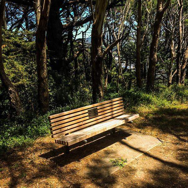 The Bench.jpg