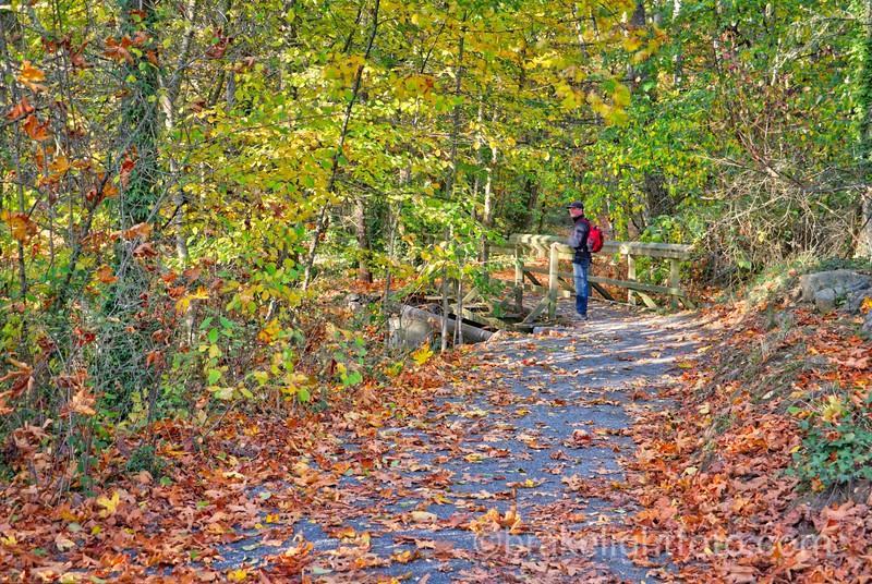 Elk Lake Beaver Lake Fall