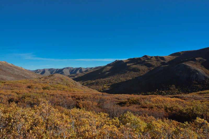 Denali-National-Park-77.jpg