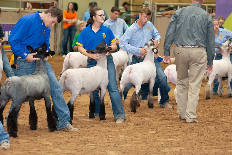 Tulsa_2019_grand-drive-sheep-6.jpg