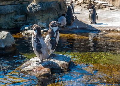 Woodland Park Zoo - August 14, 2016