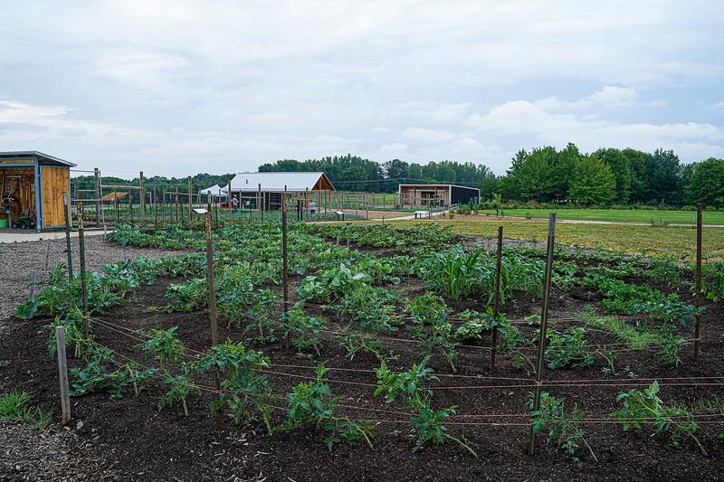 Arboretum, July Harvest-84.JPG