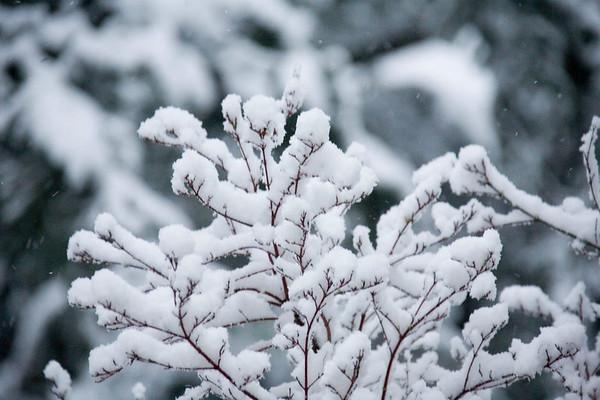 Snow_2006_TG_Sunday