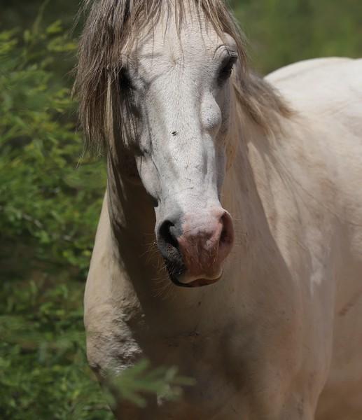 Lower Salt River Wild Horses June of 2019