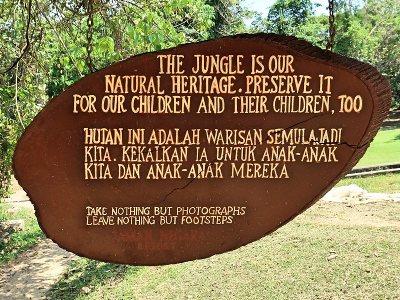 IMG_5203-jungle-natural-heritage.jpg