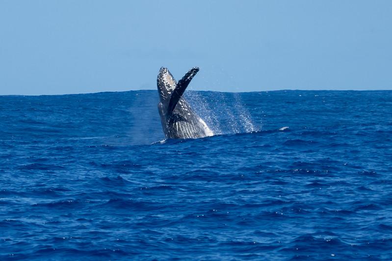 whales-leila-59.jpg