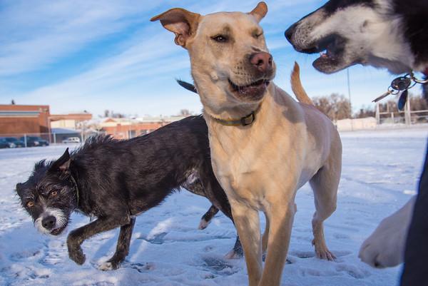 DogParkDays