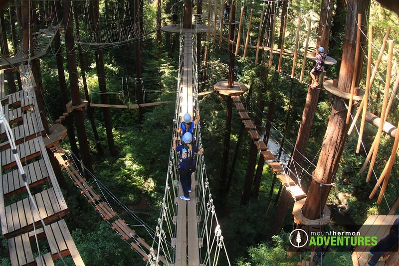sequoiaportrait_1473455784699.jpg