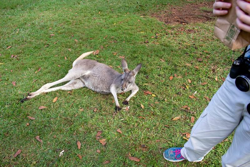 Australia_289.jpg