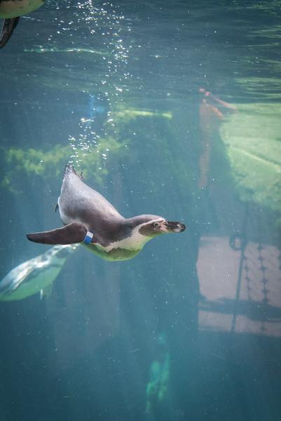 Syracuse Zoo August 2020-26.jpg