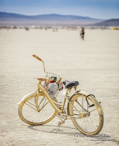 A gold bicycle loaded with the basic provisions to survive a night on the playa: water and alcohol.