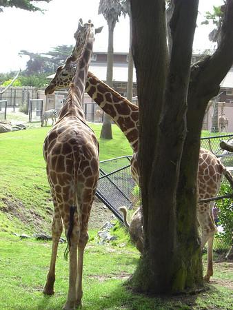 2007.08.15 SF Zoo