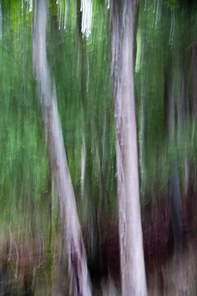 FP Tree-9834.jpg