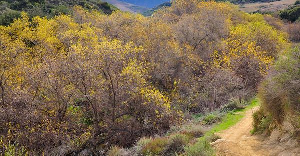 Aliso Wood Canyons