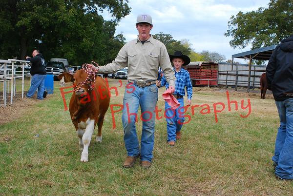 Beef club livestock show 110814