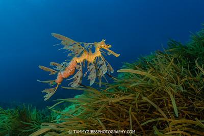 West Australia Underwater