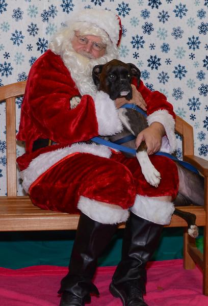 2015-12 - Santa Paws photos