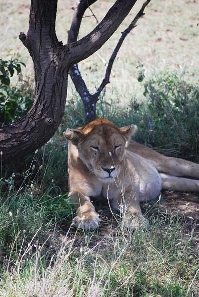 Serengeti (176).JPG