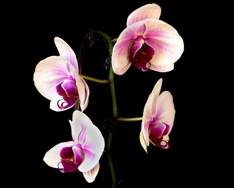 Orchids+Rekers-1.jpg