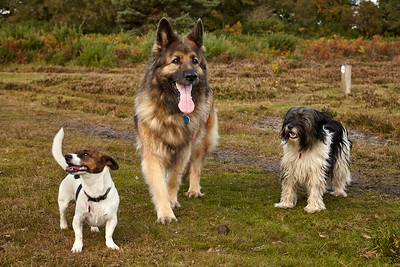 20161015_MH_Dogs
