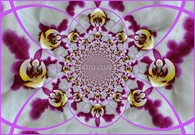 PRINT-CREATIVE-GOLD-CIRCLE OF ORCHIDS-PAT JONES