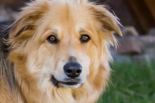 Trish Lord - Dog Portrait