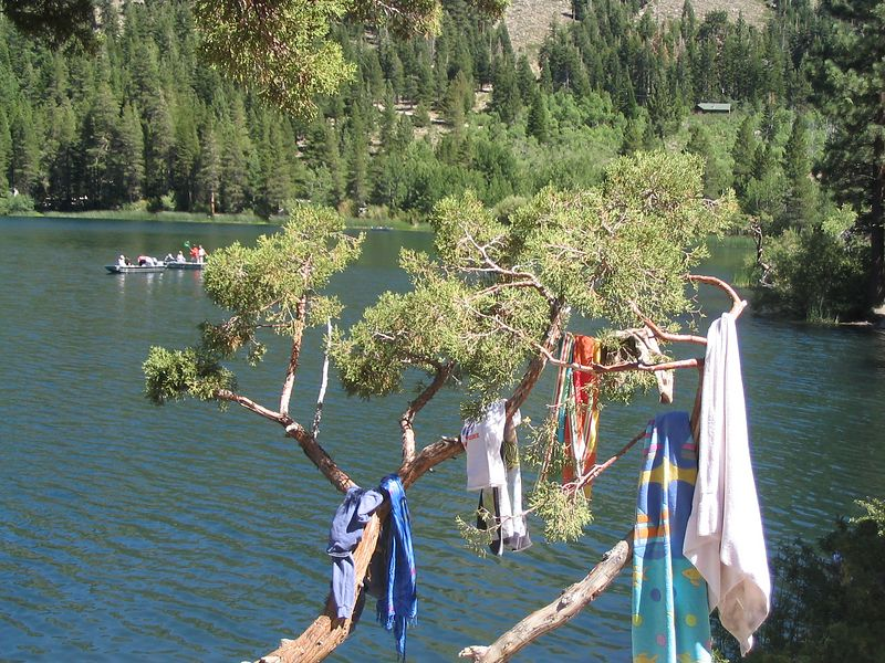 The Towel Tree is a variant of the pine usually found near freshwater lakes, especially where there are beaches.