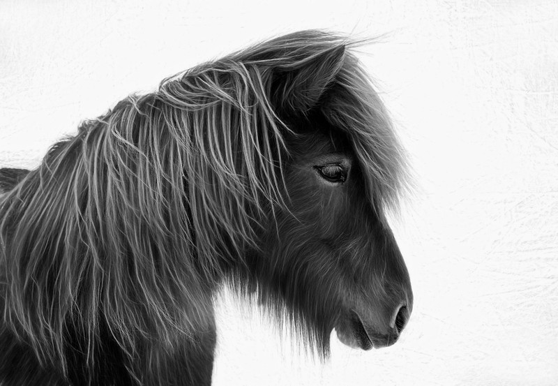 Iceland pony slight neon 2.jpg