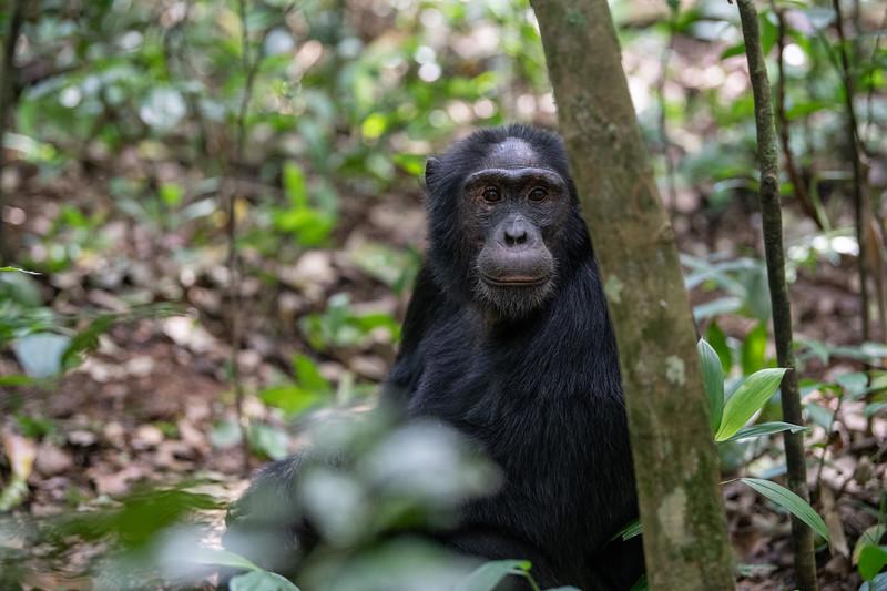 Uganda_T_Chimps-491.jpg
