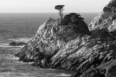 Pt Lobos Photos