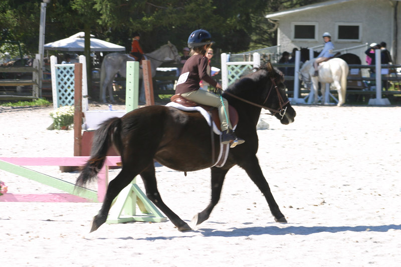 Anisa got 2nd place in walk trot canter.