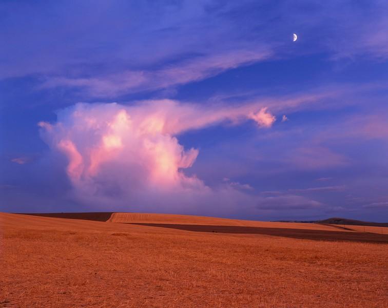 Umatilla wheatfield w moon sf.jpg