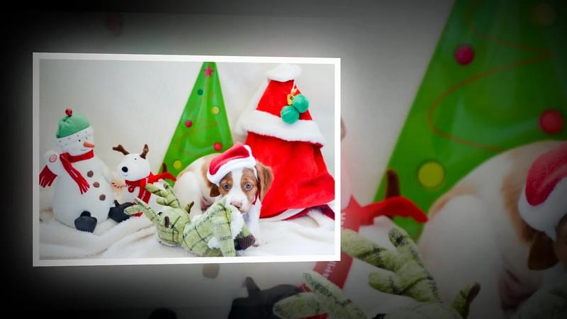 Merry Christmas featuring Joyce, Bob, Amy-Lyn, WY-R and Dottie.mp4