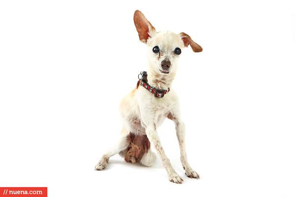 World's Ugliest Dog 2014