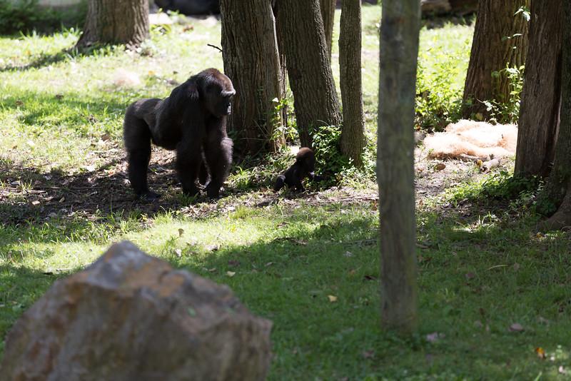 2015_08_20 Kansas City Zoo 045.jpg