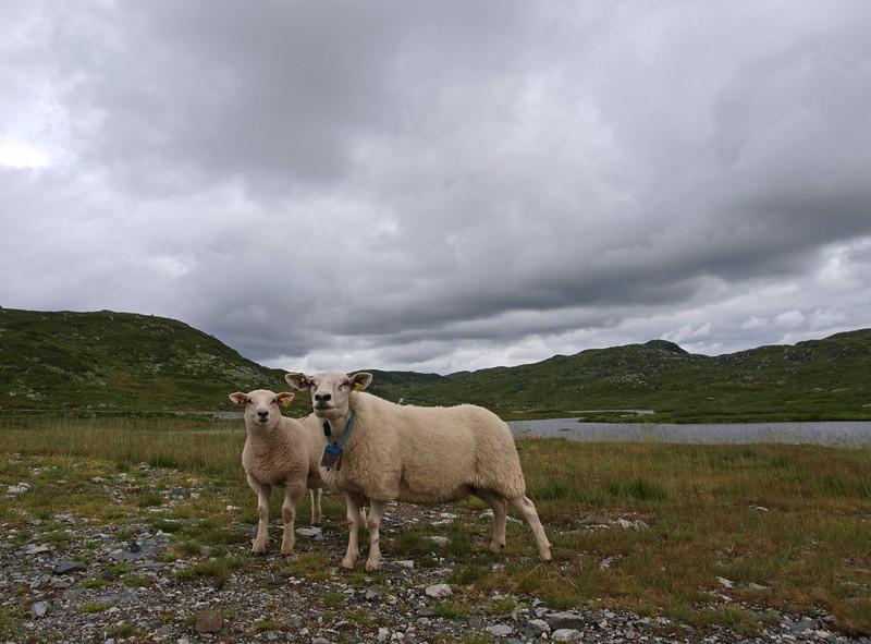 Valle-Lysebotn Fjell 26-07-11 (43).jpg